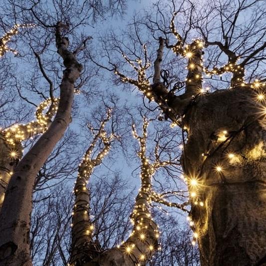 Boomverlichting-voor-kerstboom-en-boom